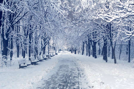 Winter landscape with trees covered with white fluffy snow. Trampled snowy road for a walk in a public park. Benches for rest on the side of the road.