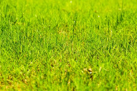 Fresh green spring grass background. Stock Photo