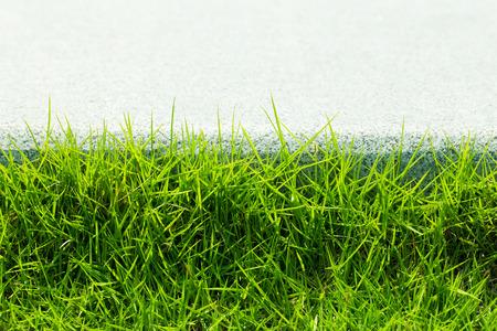Beautiful green grass background.