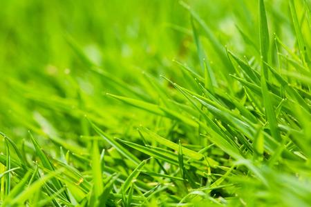 Close up shot of beautiful green grass.