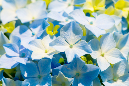 Close-up Shot of blue flowers. Stock Photo