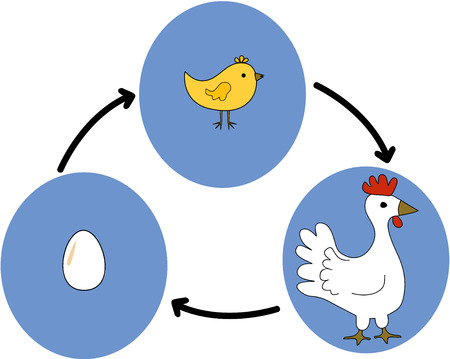 the cycle from egg to chicken Illusztráció