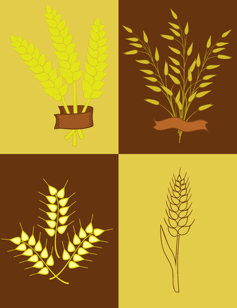 oats: illustration with ears of wheat and oats