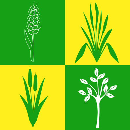 bulrush: four different icons on the topic of plants, botany, gardening