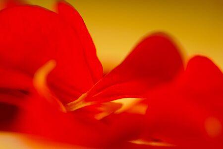 fond abstrait rouge: Red abstrait, macro photo Banque d'images