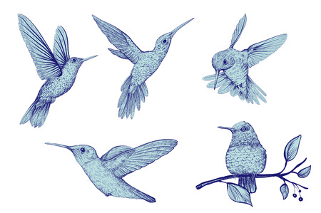 Vector clipart of isolated birds. Hand drawn hummingbird, vector set Ilustração