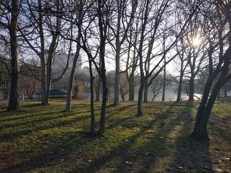 Trees and bushes in the park. Sunlight through tree trunks. Beautiful park landscape
