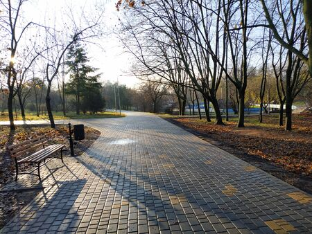 Wide pedestrian alley in a summer park. Summer landscape without people Imagens