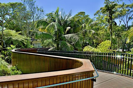 Lush tropical nature walkway at Taronga Park Zoo, Sydney, Australia.Landscape, walkway, flora, trees, scene, scenic, view, vista, sky, blue sky, color, colourful, outdoors, daylight, sunlight, nature, beauty, beauty in nature, stock, image, royalty free p