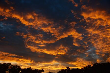 A vibrant dramatic crimson coloured stratocumulus cloudy sunrise landscape in a dark blue sky with a trees in silloutte horizon. Colourful nature background image. Gosford, New South Wales, Australia.