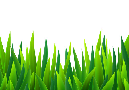 sedge: Green grass