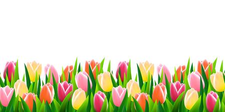campo de flores: Flores de la frontera sin problemas
