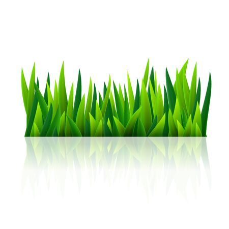 on the grass: Green grass