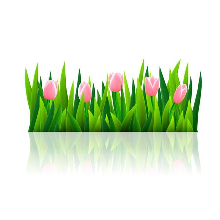 tulips in green grass: Fresh green grass and tulips, isolated over white, vector illustration