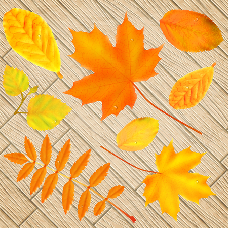 chokeberry: Set of bright autumn leaves over wooden background, vector illustration