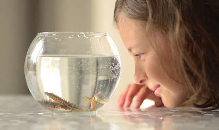 Newt under water swim in round aqua. Little girl observe triton. Child study salamander amphibia animal.