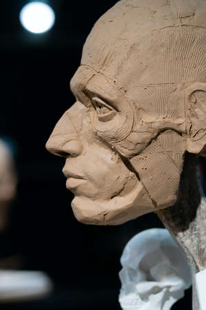 The process of creating ecorche. The sculptor is working. Standard-Bild