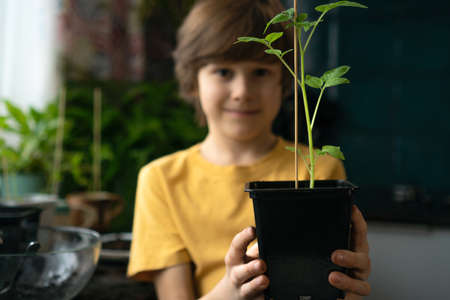 Little boy planting seedlings at home. An independent child is busy with a hobby, replanting plants, sprinkling flowers. Lifetime concept