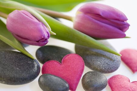 tulip flower with pebble and hearts