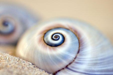 afrique du nord: Snailshells trouv� � la plage sur l'�le de Djerba (Tunisie, Afrique du Nord)