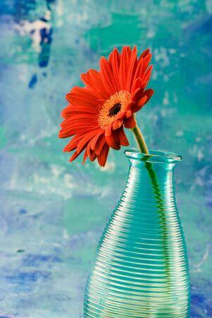 marguerite gerbera rouge dans un vase, en face de fond bleu