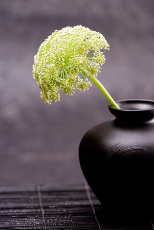 Parsley weed flower in black vase