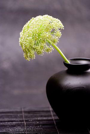 Parsley weed flower in black vase