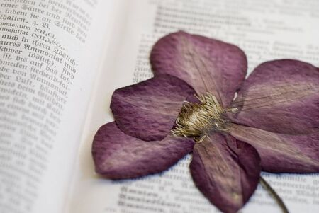 clematis flower: pressed clematis flower in old book