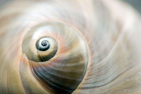 달팽이 껍질 닫습니다