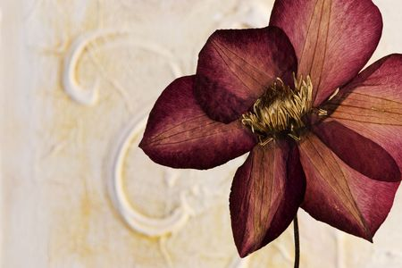 clematis flower: pressed clematis flower in front of artwork background, artwork is created and painted by myself  Stock Photo