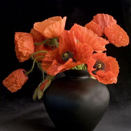 Bunch of red poppy flower in black vase