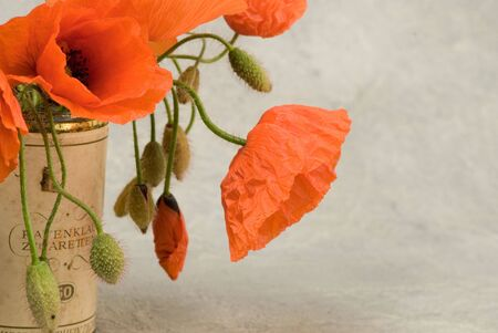 Bunch of red poppy flower in old tin photo