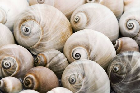 background of many snailshells