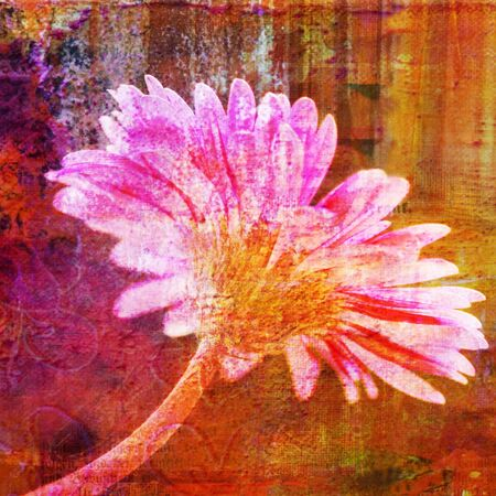 pink gerbera flower photo