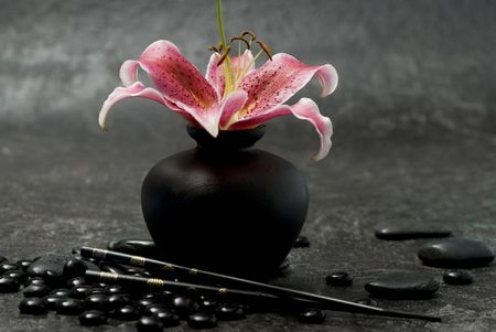 pink lily flower with black pebble photo