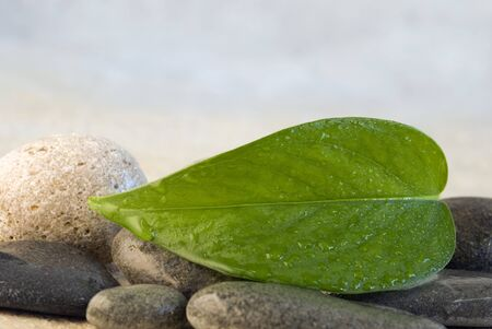 close up of fresh green leaf photo