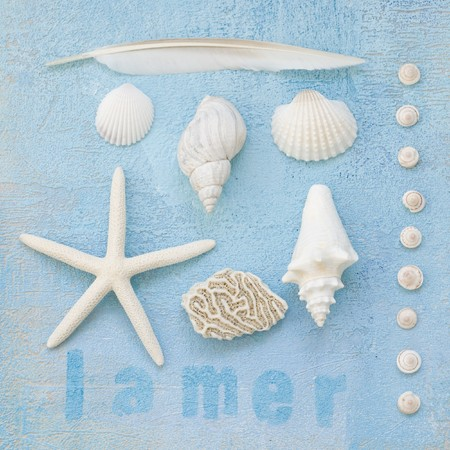 collage of shells and other beach flotsam