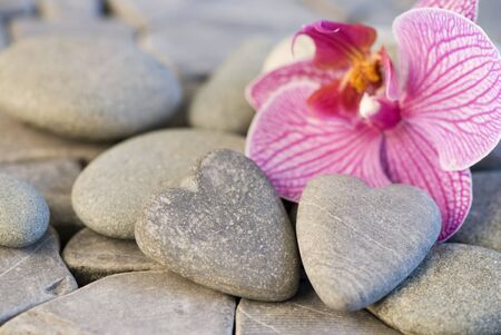 still life with heart shaped pebble and orchid Stock Photo - 4426169