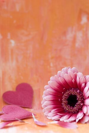 pink gerbera flower and felt hearts photo