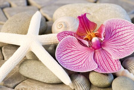 still life with orchid and starfish on stone background photo