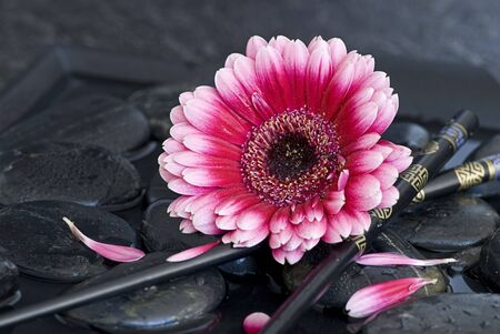 pink gerbera daisy with chopsticks photo