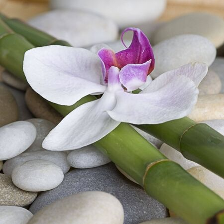 orchid: orchid and green bamboo sticks on pebble Stock Photo