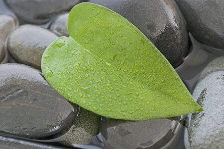 fresh green leaf with drops of water on gray pebble Stock Photo - 5275634