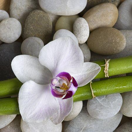 조약돌에 난초와 녹색 대나무 지팡이