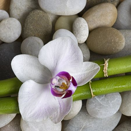 orchid and green bamboo sticks on pebble Stock Photo
