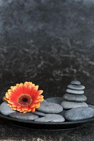 orange gerbera flower and pebble photo
