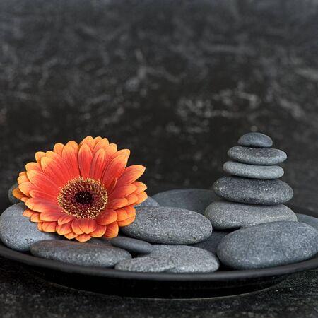 orange gerbera flower and pebble Stock Photo - 5592819