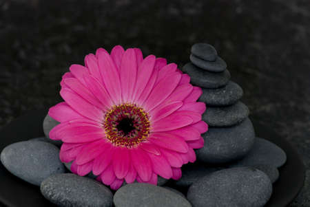 pink gerbera and stone tower photo