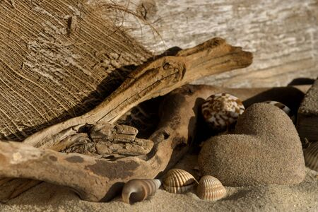 Sandheart, driftwood and shells photo
