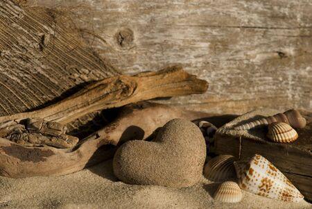driftwood: Sandheart, driftwood and shells